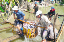 Ca tra sap bay thuong lai Trung Quoc hinh anh