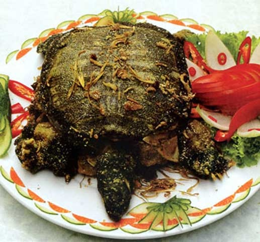 Turtle meat cooked