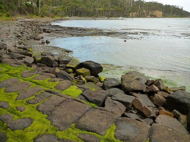 tessellatedpavement32