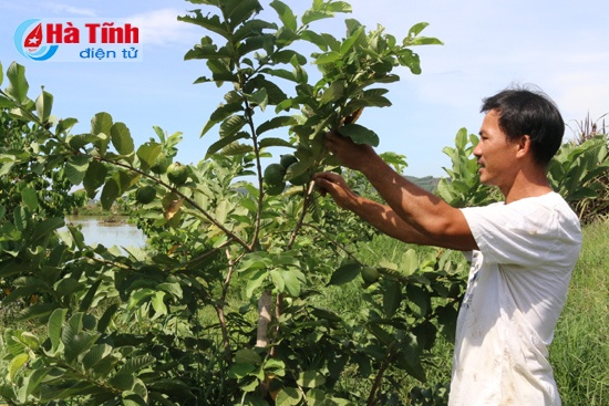 Nuoi vit troi, thu tien ty hinh anh 2